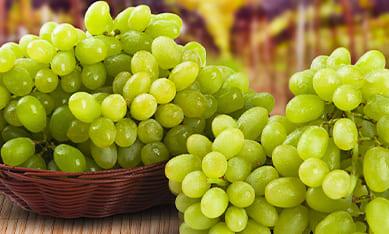 купить саженцы винограда в питомнике