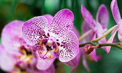 купить комнатные орхидеи
