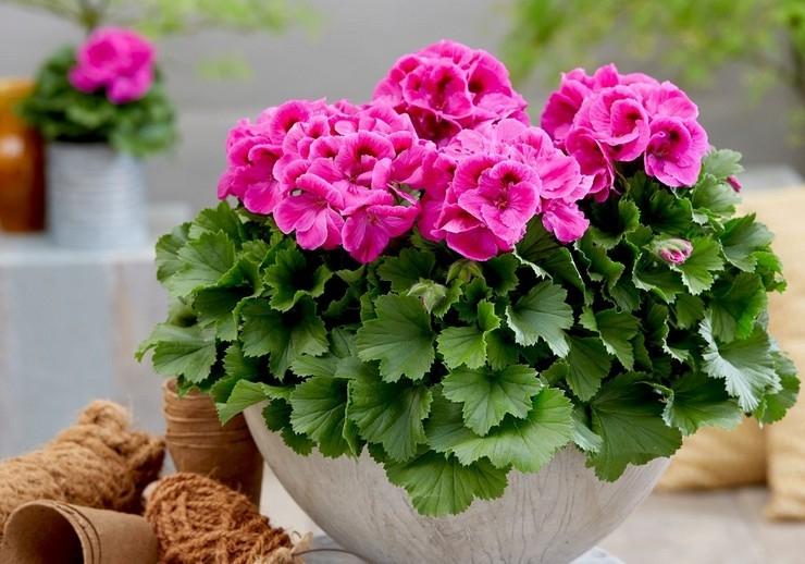 комнатные цветы купить